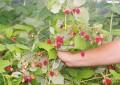 EURES/Muncitorii pentru agricultură, la mare căutare